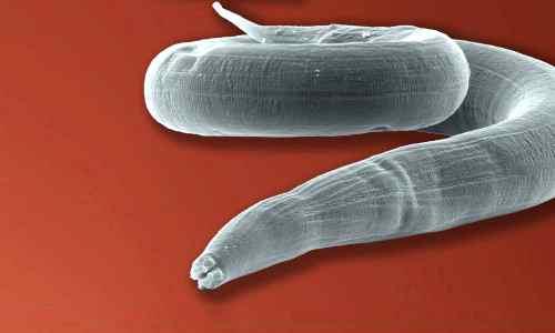 кашель от паразитов у взрослых лечение